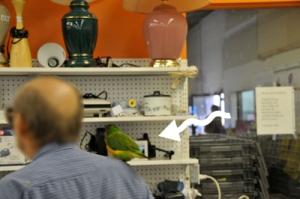 parrot copy