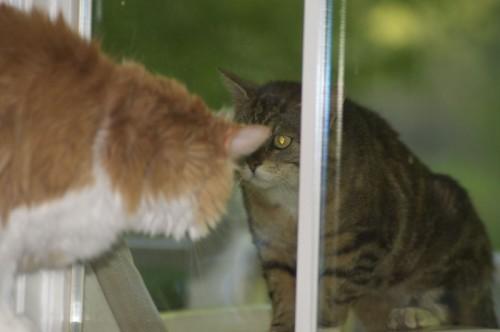 OK BIG BOY, COME ON OUT!