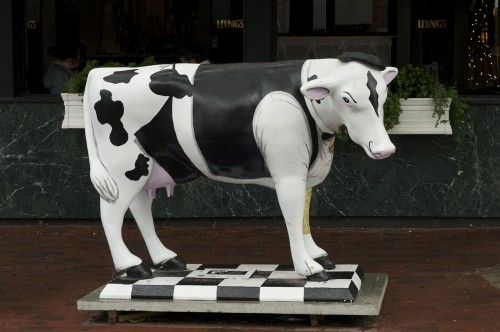 COW WITH A JOB!