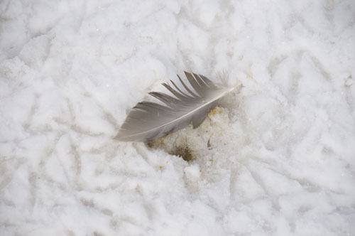 Feather and Duck tracks