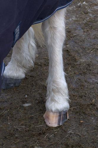 White stockings...