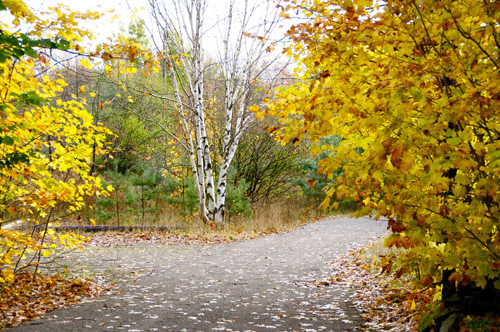 FALL IS BRIGHT AND COLOURFUL