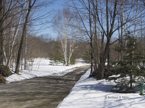 EARLY SPRING -SNOW IS SHRINKING
